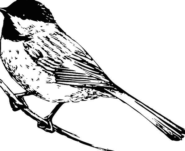 Chickadee Fowl Animal Physical Bird Outdoors Wildl