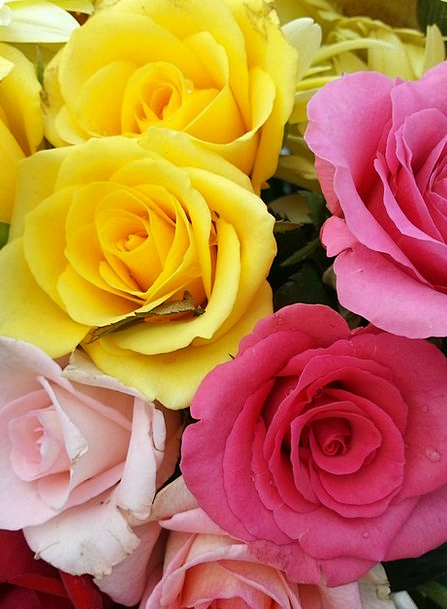 Bouquet Bunch Designs Pink Flushed Roses Yellow Cr