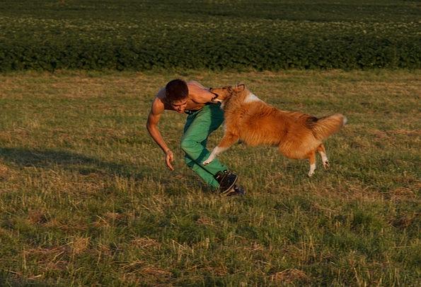 Collie Dog Exercise Dog Training Animal Dog Traini