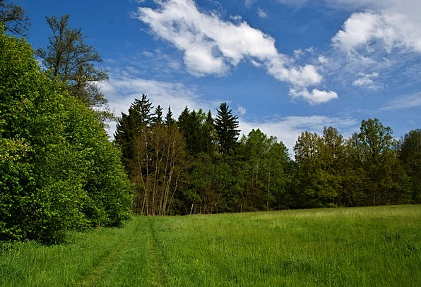 Meadow Field Landscapes Woodland Nature Grass Lawn