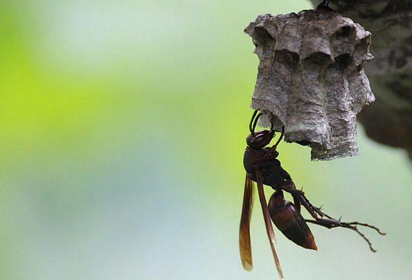 Wasps Honey Darling Bee Flying Insects