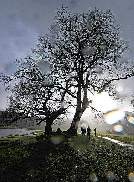 Tree Sapling Landscapes Volley Nature Cumbria Rain