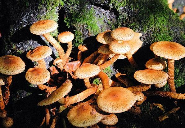Fungi Mushrooms Forest Fungus Mushroom Woodland To