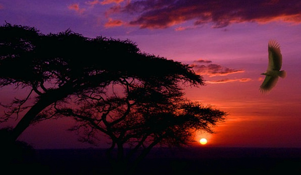 Scenery Set Vacation Sundown Travel Africa Sunset