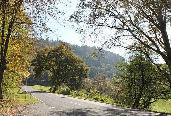 Autumn Fall Traffic Street Transportation Trees Pl