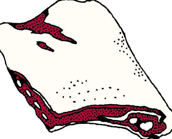 Beef Complaint Drink Essence Food Ribs Beams Meat