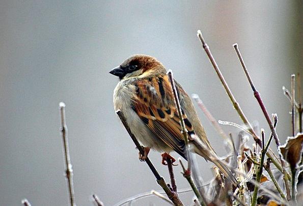 Sparrow Fowl Animal Physical Bird Nature Countrysi