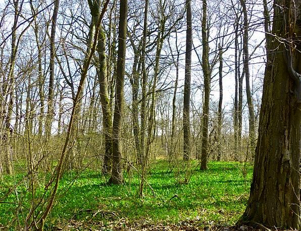 Spring Coil Landscapes Nature Forest Woodland Spri