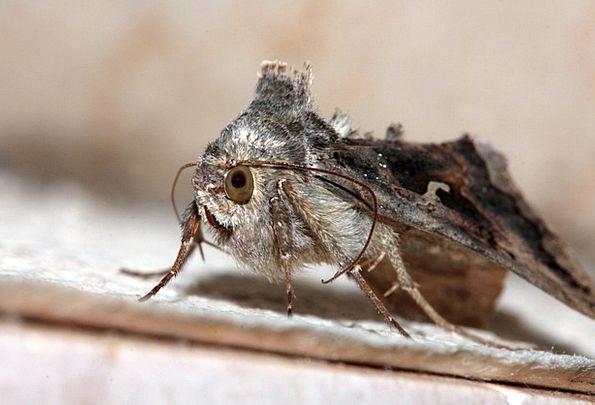 Motte Judgments Wing Annex Eyes Probe Investigatio