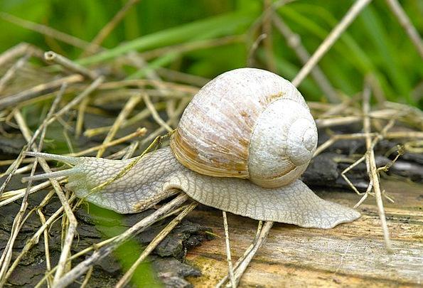Snail Landscapes Gradually Nature Nature Countrysi