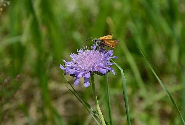 Butterfly Landscapes Floret Nature Peaceful Nonvio