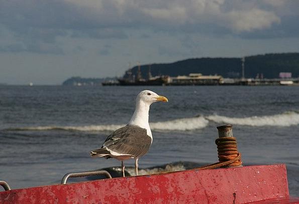 Baltic Sea Coast Sopot Poland Boats Ships Bird Sea