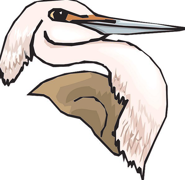 Heron Skull Pink Flushed Head Bird Fowl Fauna Long
