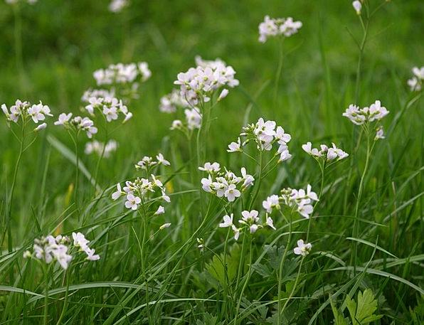 Heath Orchid Landscapes Mauve Nature Meadow Field