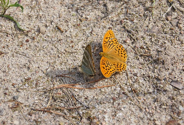Butterfly Landscapes Countryside Nature Fauna Wild