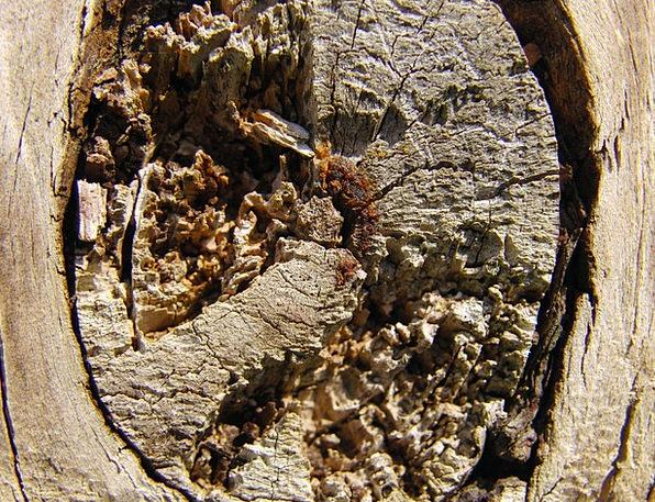 Texture Feel Textures Sapling Backgrounds Knot Lum