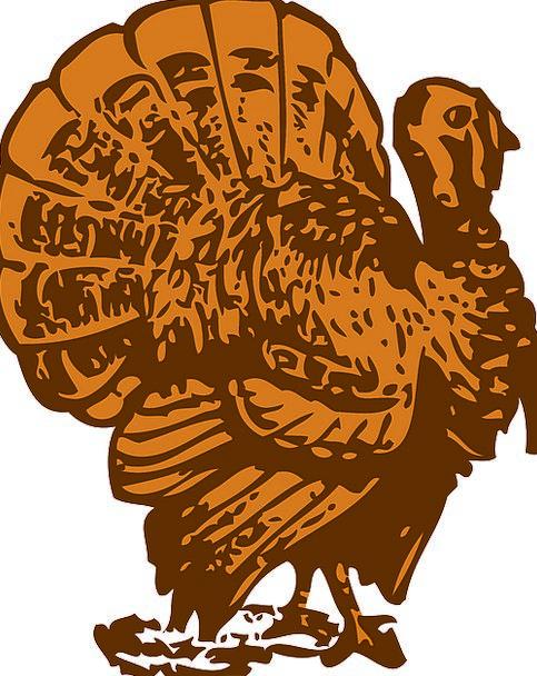 Turkey, Fowl, Poultry, Bird, Food, Nourishment, Farm, Farmhouse