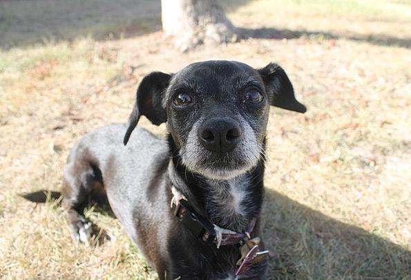 Dog Brat Pet Domesticated Puppy Animal Physical Ca