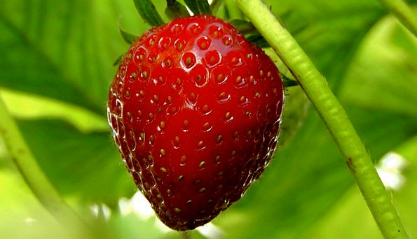 Strawberries Drink Food Fruit Ovary Berries Ripe F