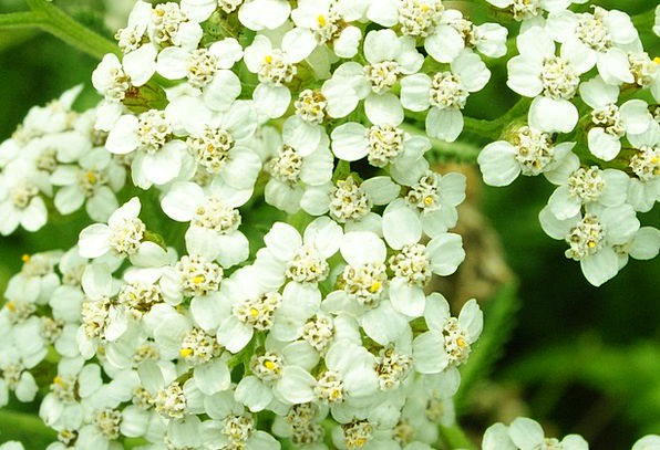 Flowers Plants Arenas White Snowy Fields Fleurs De