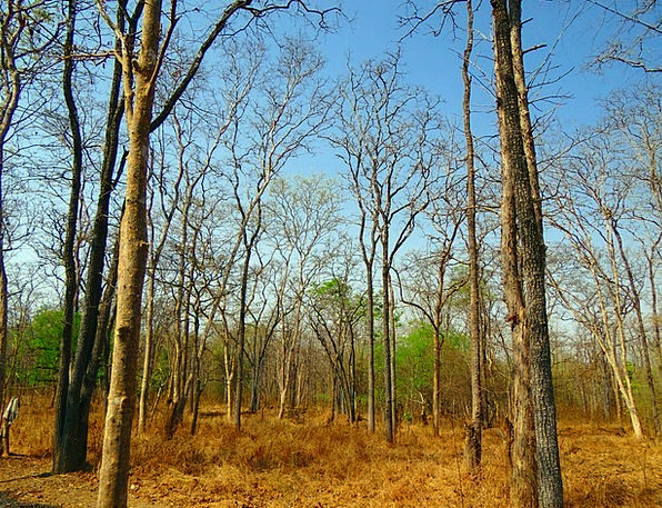 Forest Woodland Landscapes Nature Mixed Forest Dec