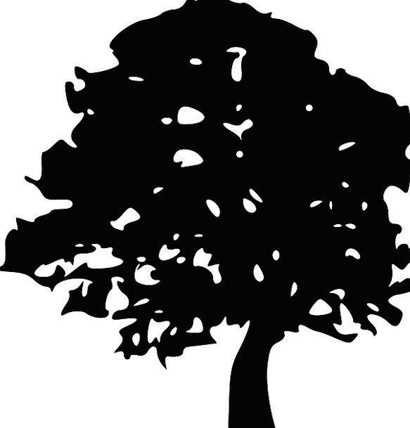 Tree Sapling Tree Trunk Tree Silhouette Tree Branc