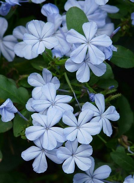 Flowers Plants Landscapes Nature Flower Floret Cap