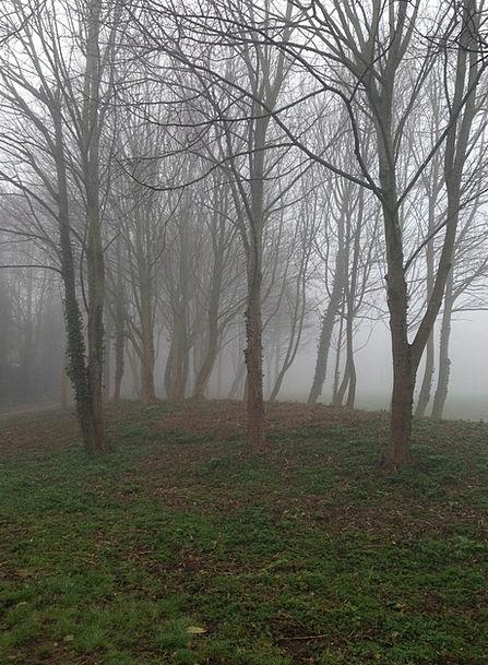 Nature Countryside Landscapes Plants Nature Fog Mi