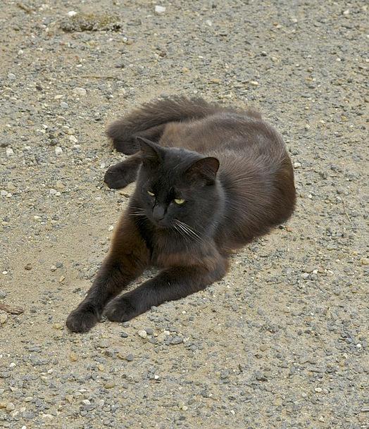 Cat Feline Catlike Rouffignac Pet Domesticated Mam