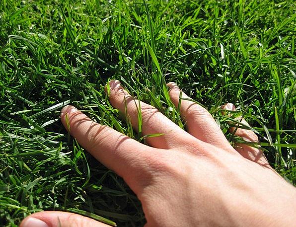 Hand Pointer Lawn Finger Digit Grass Meadow Field