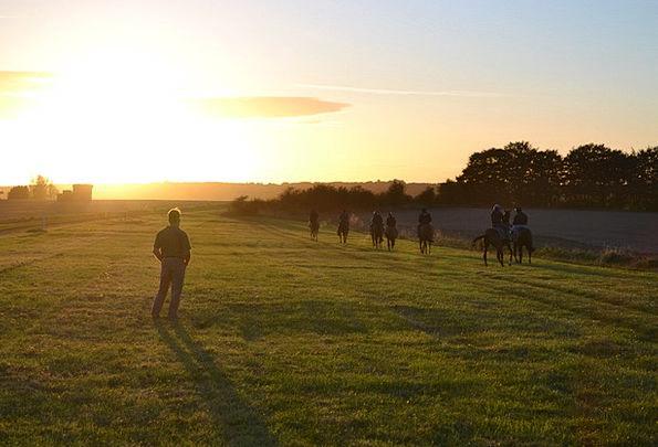 Racehorses Cattle Training Exercise Horses Morning