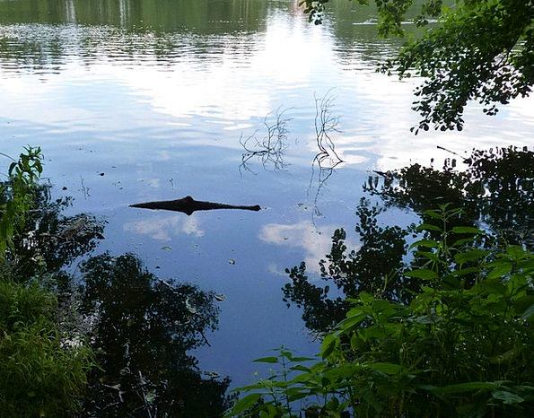 See Understand Line Optical Visual Crocodile Decep