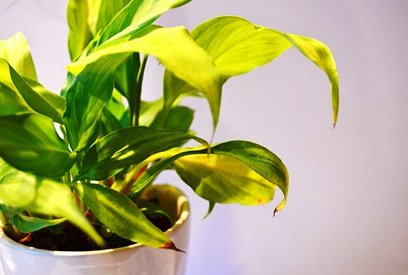 Green Lime Florae Leaves Greeneries Plants Indoors