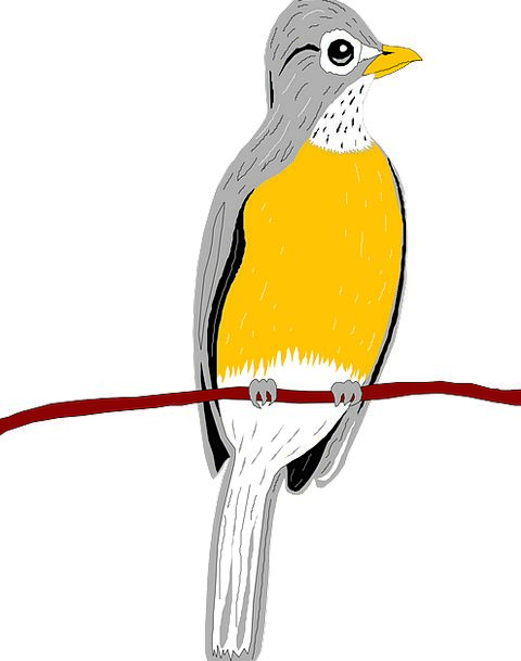 Bird Fowl Division Wings Annexes Branch Robin Feat