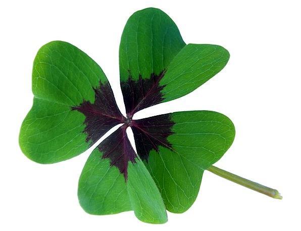 Lucky Clover Luck Fluke Klee Four Leaf Clover Green Lucky