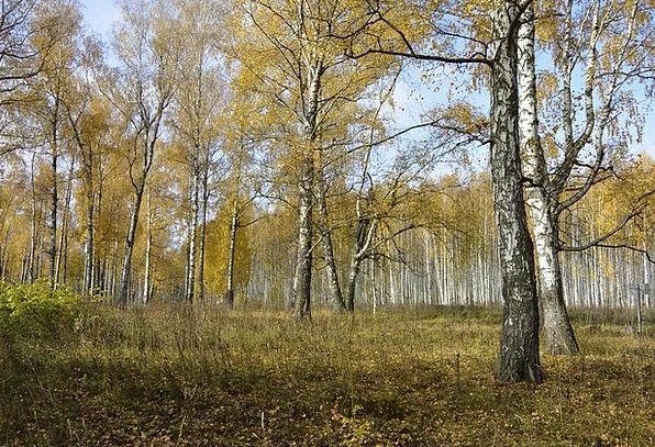 Forest Woodland Landscapes Nature Autumn Fall Autu
