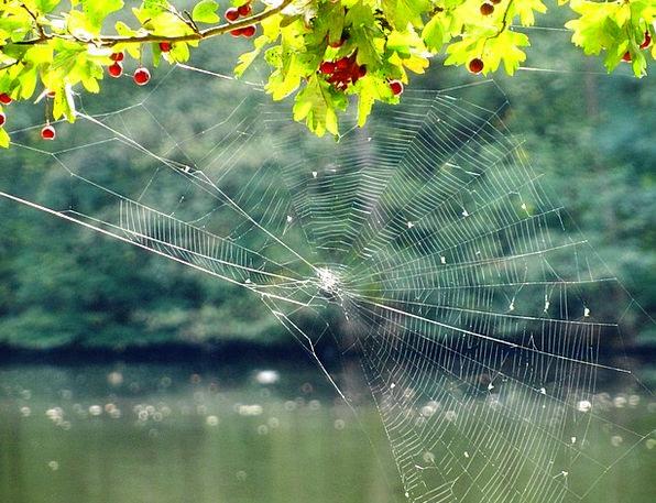 Cobweb Landscapes Net Nature Tender Loving Network