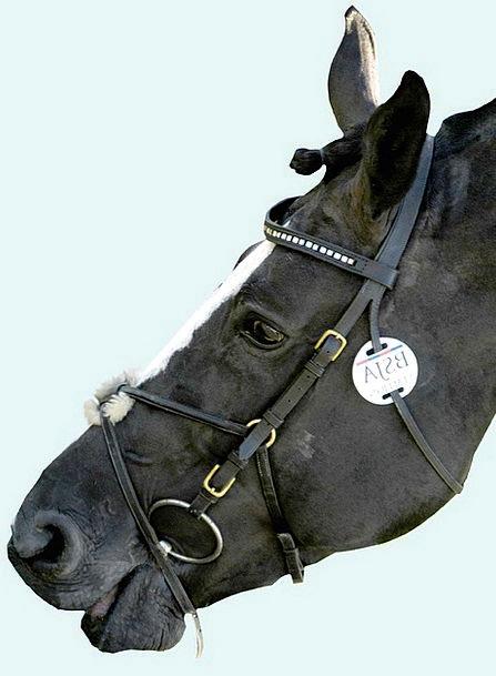 Horse Mount Skull Bridle Halter Head Equine Horsey