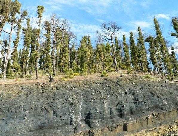 Lava Magma Fire Canary Kiefer Forest Fire La Palma