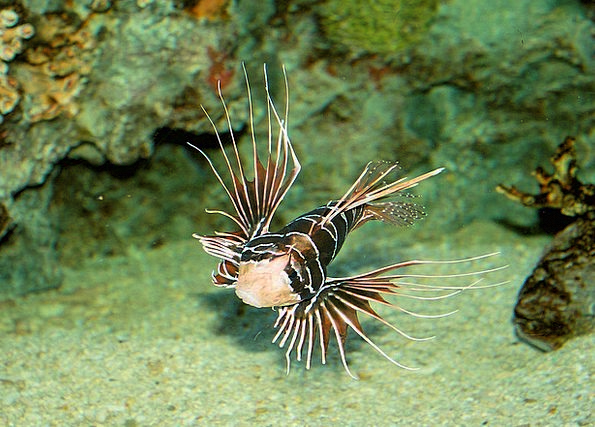 Scorpion Landscapes Angle Nature Aquarium Fish Aqu