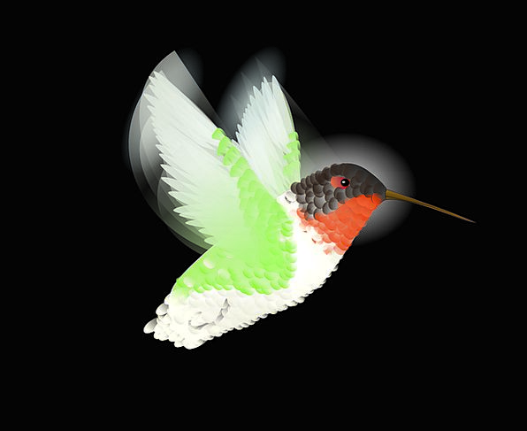 Hummingbird Fowl Humming Droning Bird Flying Hover