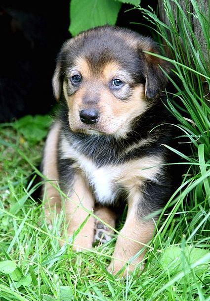 Puppy Brat Canine Baby Darling Dog Cute Attractive