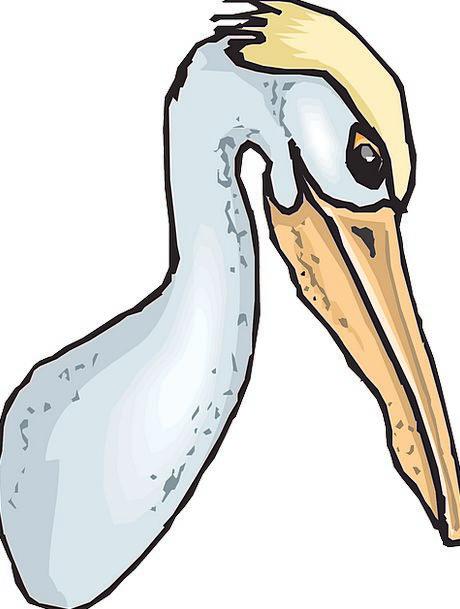 Pelican Pouch Bag Seabird Pelecanus Erythrorhyncho