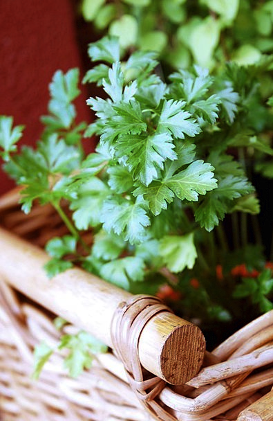 Parsley Basil Landscapes Basils Nature Aromatic He