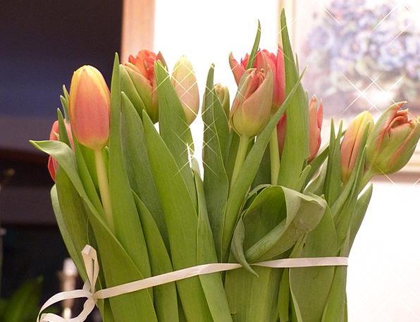 Tulips Plants Tulip Flowers Reddish Spring Coil Pi
