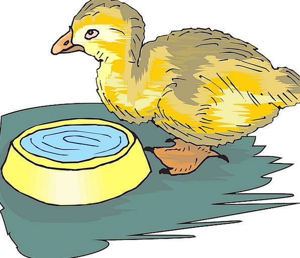 Duckling Darling Bird Fowl Baby Waterfowls Yellow