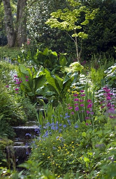 Hillside Garden Establishing Shrubs Bushes Plantin