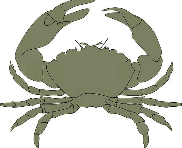 Crab Talons Water Aquatic Claws Delicious Animal P