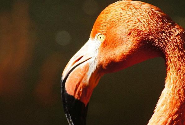 Flamingo Landscapes Faunae Nature Nature Countrysi