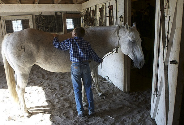 Horse Mount Turned-out Animal Physical Groomed Man